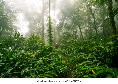 morning in A cloud forest, also called a fog forest, is a generally tropical or subtropical, evergreen, montane, moist forest characterized by a persistent, frequent or seasonal low-level cloud cover