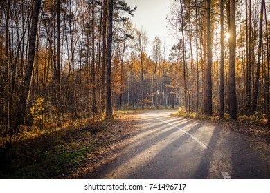 Morning country road through the pine forest