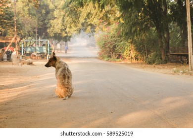 morning in countryside with dog
