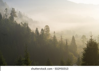 at morning dawn mist over the forest in the Carpathian mountains