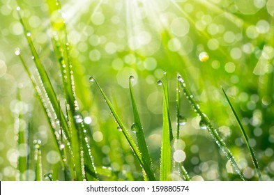 The morning dew. Abstract background of shining a bright morning dew.