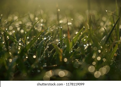 Morning dew in the meadow, taken by zooming lens with small depth of fields.