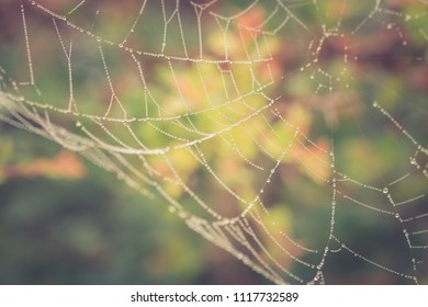 Morning dew on the spider web, vintage look