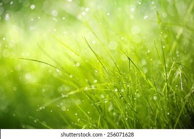 Morning dew on spring grass,Shallow Dof.