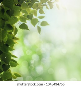 Morning dew. Seasonal backgrounds with clean dew on the foliage and bright sunlight