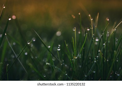 morning dew with sun