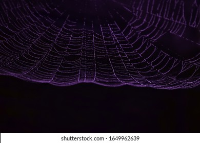 The morning dew was trapped in a purplish-colored spider web exposed to light against a black background. Spider web pattern not in focus.