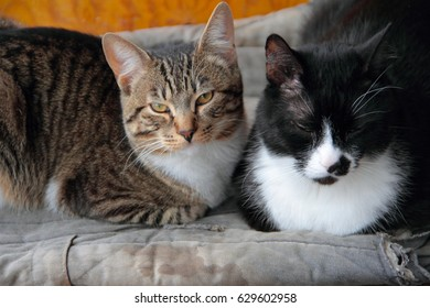 Morning domestic cats have a rest on a balcony