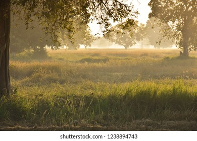 Morning field in the Northeastern of Thailand