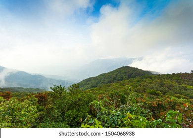 Morning fog in dense tropical rainforest ,Fog, Rainforest, Tree, Tropical Rainforest, Forest,Rainforest jungle aerial view,Treetop, Diminishing Perspective, Forest, Rainforest, Aerial View