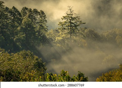 Morning fog in dense tropical rainforest, Chiang Dao, Thailand