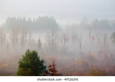 morning fog in a forest
