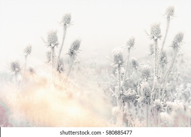 Morning fog and frost in the meadow - hoarfrost on thistle (soft focus on thistle)