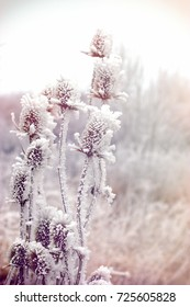 Morning fog and frost in the meadow - hoarfrost on thistle - burdock