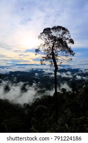 Morning fog at Iyerweng BETONG YALA Province, Thailand.