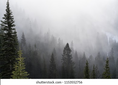 Morning Fog in the Mountains