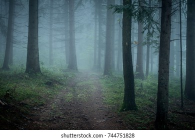 Morning fog on the forest somewhere in europe. Fog and trees.