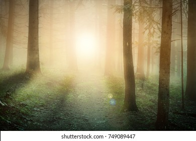 Morning fog on the forest somewhere in europe. Fog, sun and trees.