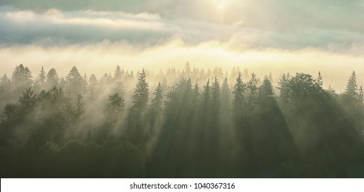 Morning fog on the wooded mountans slope after the sunrise.