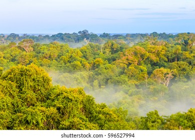 morning fog over the brazilian rainforest of the Amazonas