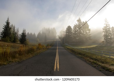 Morning fog over an open country road in Lake Oswego, Oregon.