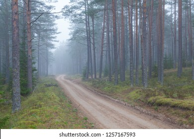 Morning fog and sandy road in a pine forest