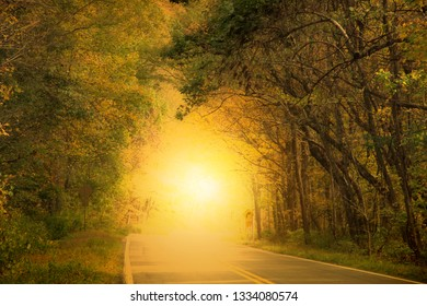 Morning fog and the sun rise in autumn alley