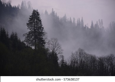 Morning fog at sunrise in the mountains