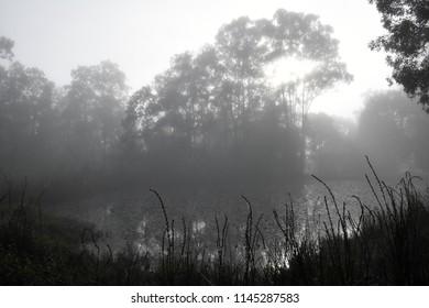 Morning Fog Trees around a Pond