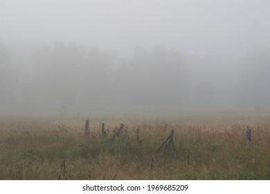 morning fog in the village