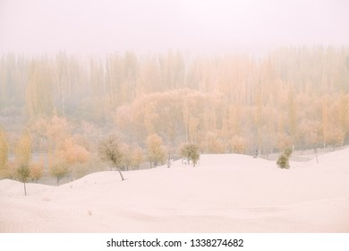Morning fog with windy in the Katpana cold desert. Landscape view of cloudy autumn foliage in the forest. Skardu, Gilgit Baltistan, Pakistan.