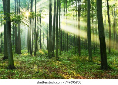 Morning in the forest
