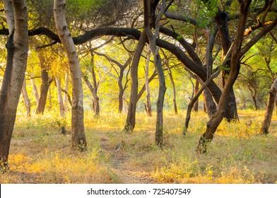 Morning in forest, Golden light in forest.
