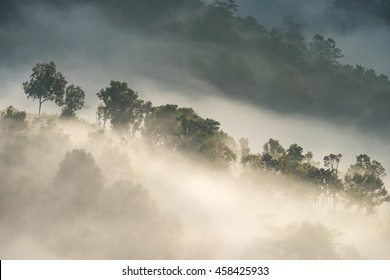 morning Forest and the mist