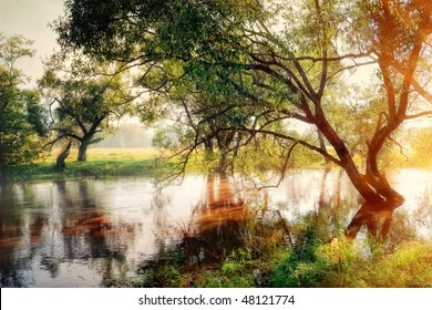 Morning forest river and willow in gold fog