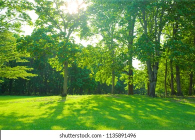 morning forest , shade of trees