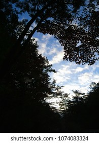 Morning forest silhouette