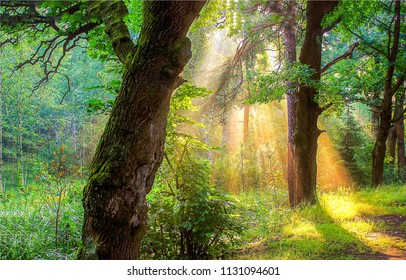 Morning forest sunlight shadows scene. Forest sunlight in morning landscape. Forest trees sunlight view