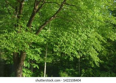 Morning in the fresh green forest