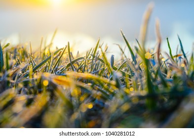 Morning frost on green grass in the rays of the rising sun close-up selective focusing