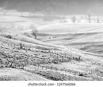 Morning frost on the slopes near Villard de Lanc, France (black and white)