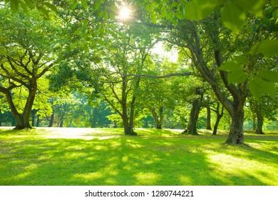 morning garden , shade of trees