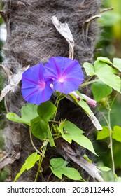 Le matin glorifie des fleurs avec un tronc de palmier à l'arrière-plan.