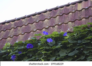 65 Haus Haus Zaun Images Royalty Free Stock Photos On Shutterstock