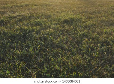 Morning grass on the field in an ordinary city