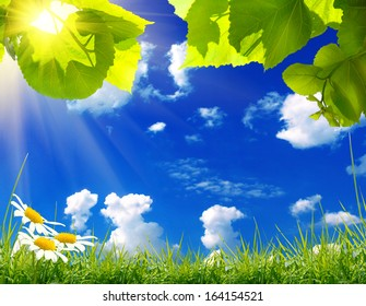 morning green nature background with beautiful drop