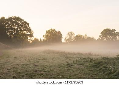 Morning haze over a meadow.Location: Germany, North Rhine - Westphalia, Borken