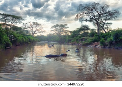 Morning landscape of African river and hippos family