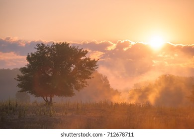 Morning landscape with fog, sun and tree