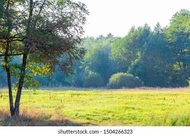 Morning landscape with forest glade